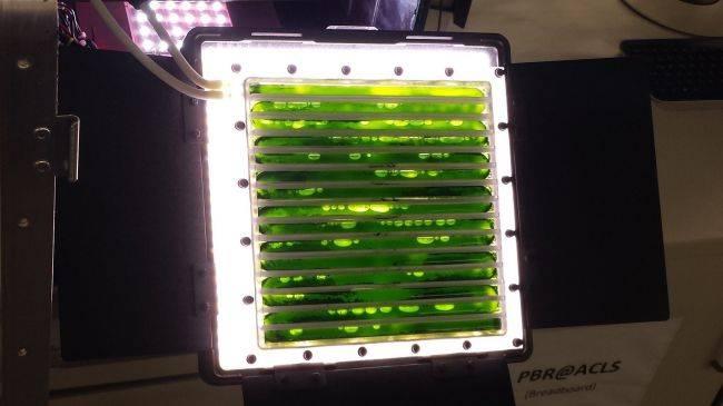Biorreactor de algas