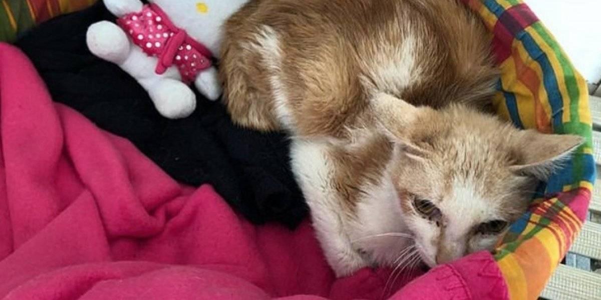 Gato sobrevivió sin comida ni agua tras pasar accidentalmente 45 días en un contenedor