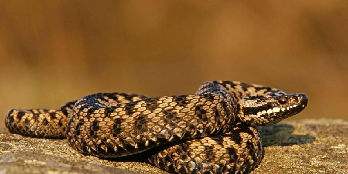 Insólito: Anciano murió al tratar de vengarse de la serpiente que lo había mordido