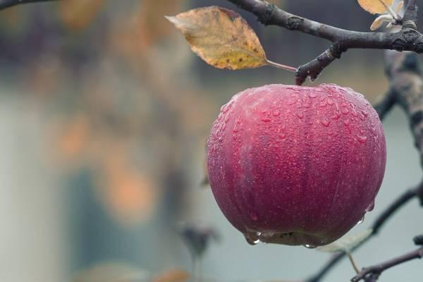 Cuanto tiempo debo tomar el vinagre de manzana para adelgazar