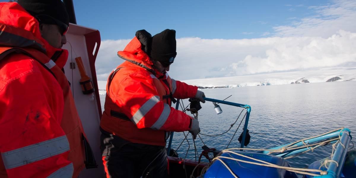 Tras derretimiento de glaciares ha aumentado el desarrollo de microalgas que absorben CO2
