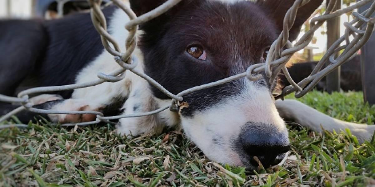 """""""No le hagas la vida tan de m***da al animal, porque él no pidió ser tuyo"""": policía se gana el respeto de las redes sociales por dar enorme lección a dueña de perrito maltratado"""