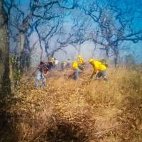 Incendio forestal en Oaxaca