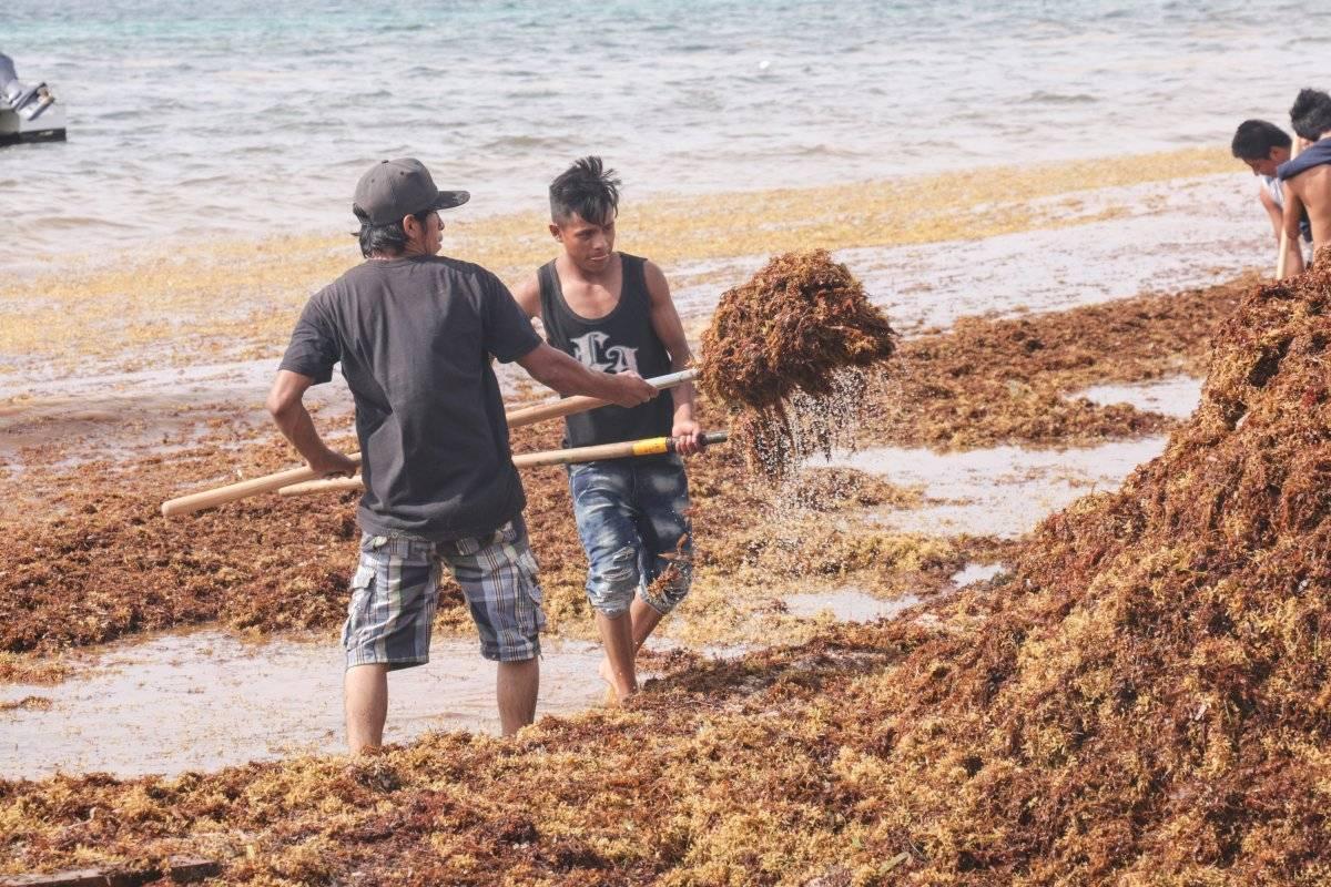 Sargazo en playas de Quintana Roo Foto: Cuartoscuro