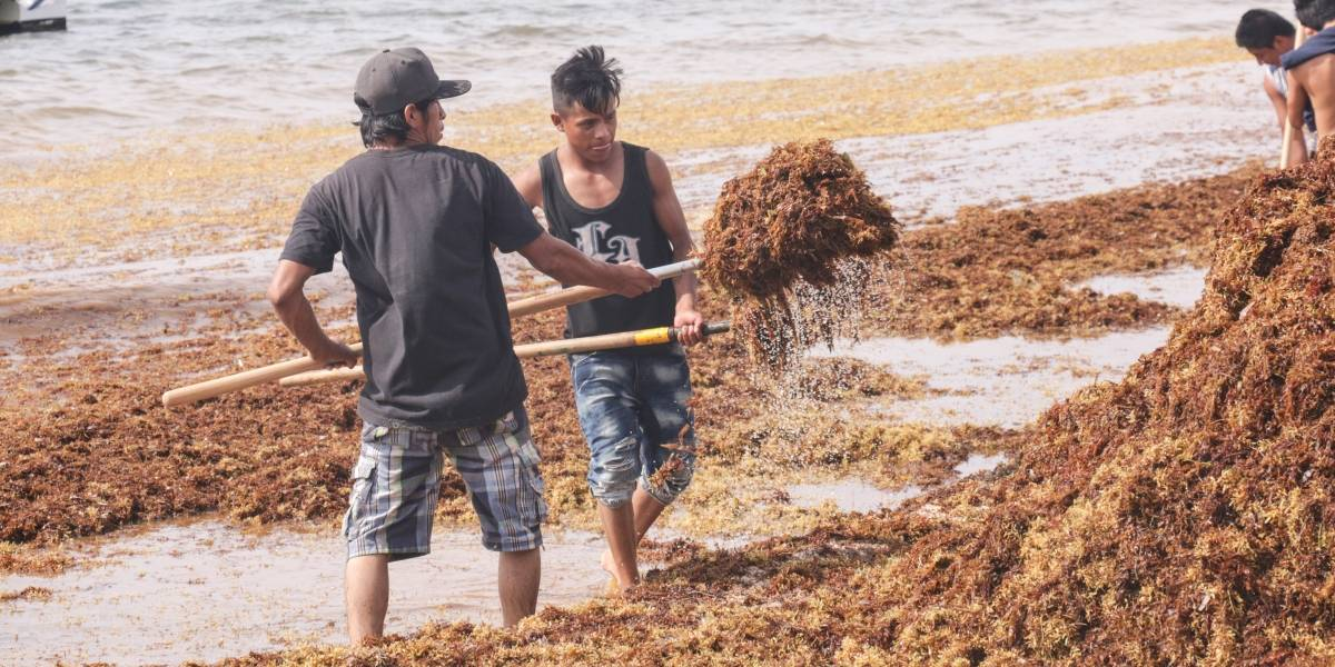 ¿Qué playas tienen sargazo en México?