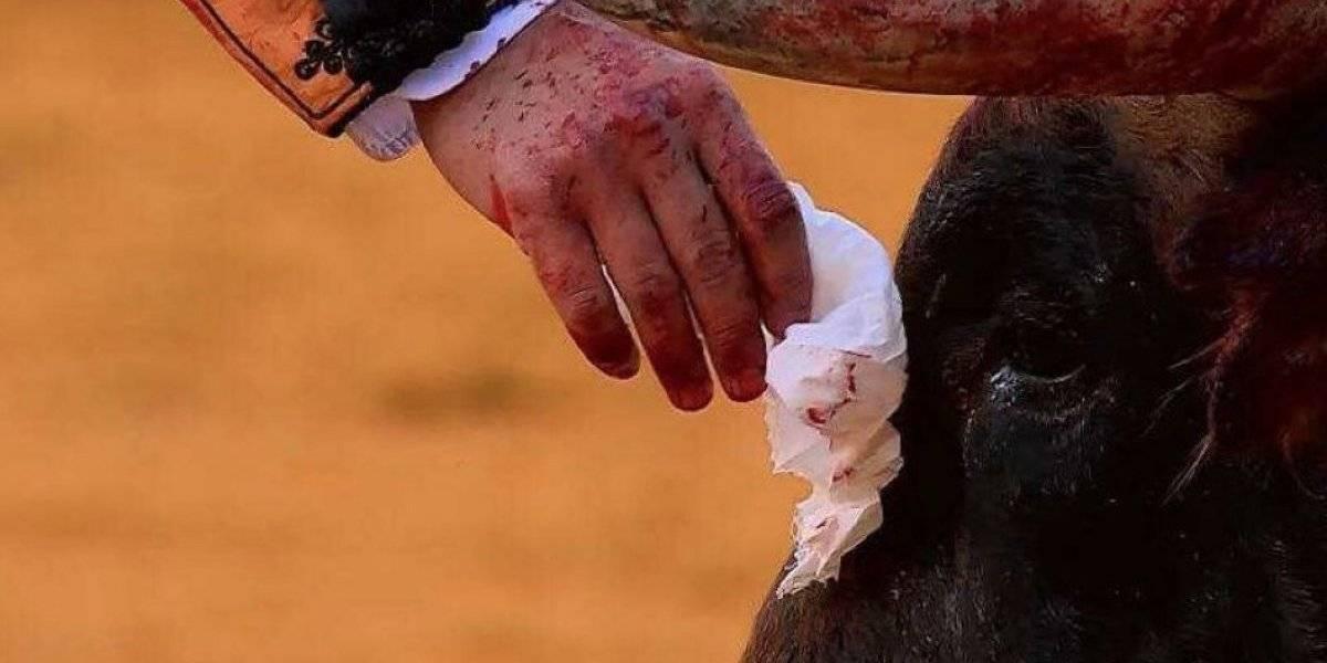 """""""Crueldad sin límites"""": la dura condena a gesto de torero que limpió las lágrimas a un toro antes de matarlo"""