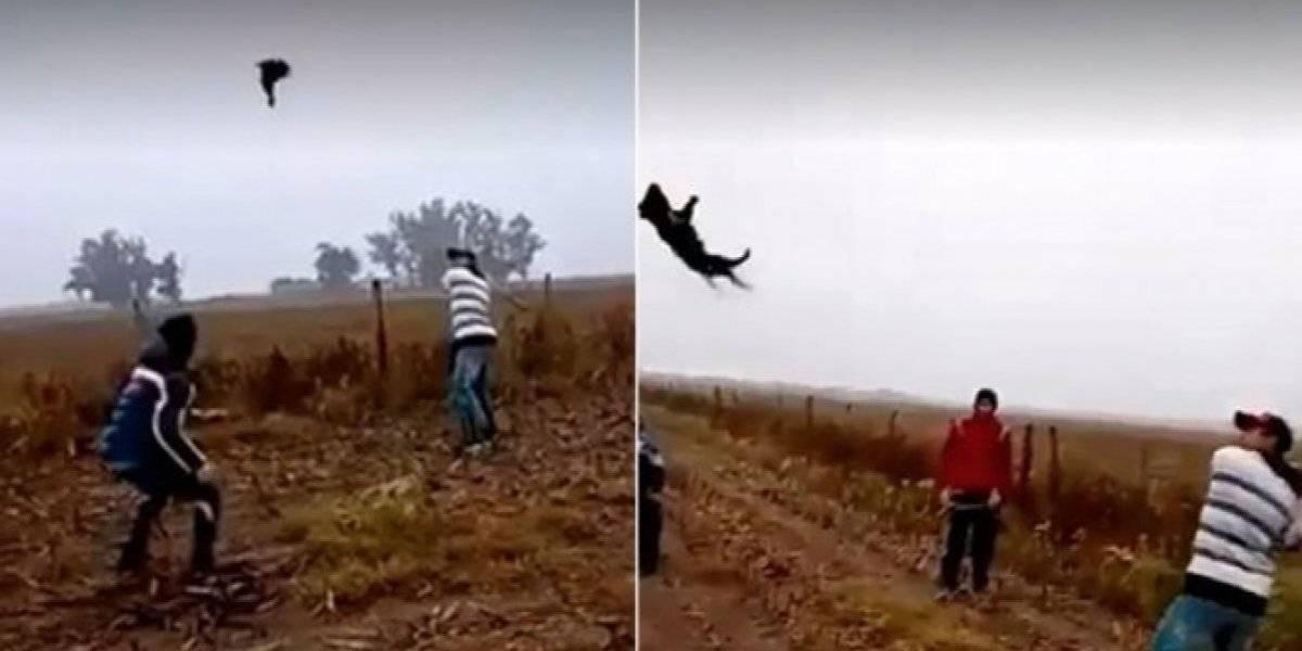 """De dónde salen estos monstruos"": matan a un perrito tras lanzarlo y golpearlo como si fuera pelota de béisbol"