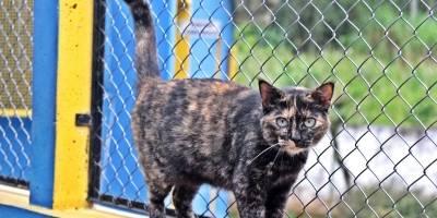 adoção animais Mauá