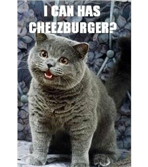 ¿De dónde salió el meme de los gatos y la