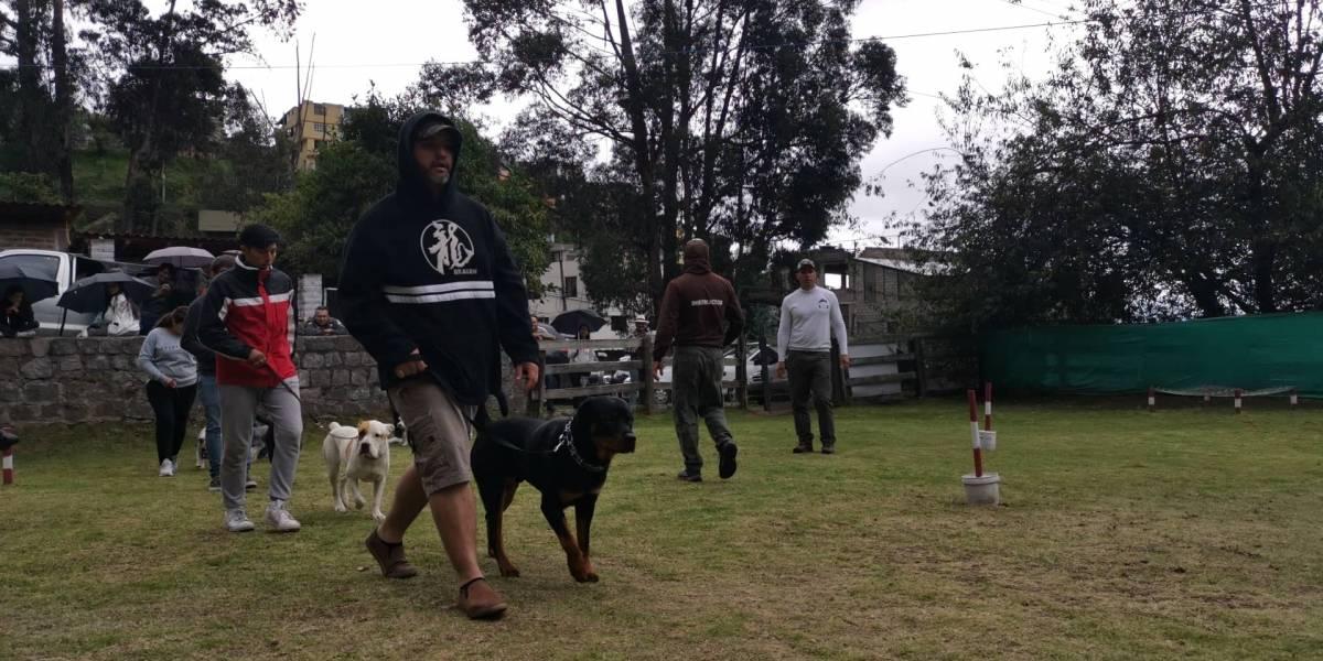 ¿Hijo o mascota? Humanizar a los perros puede hacerles daño