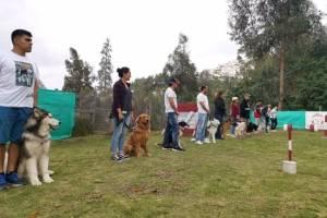 humanizar a los perros