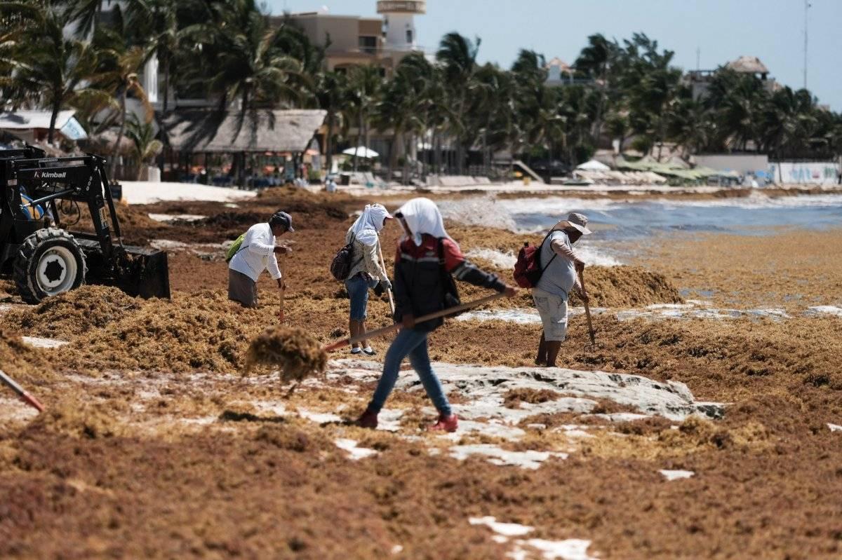 Comienzan trabajos para retirar sargazo. Foto: Cuartoscuro