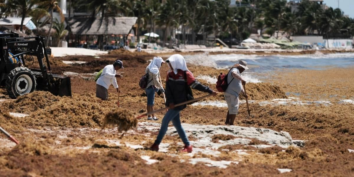 Comienzan a retirar sargazo de playas de Quintana Roo