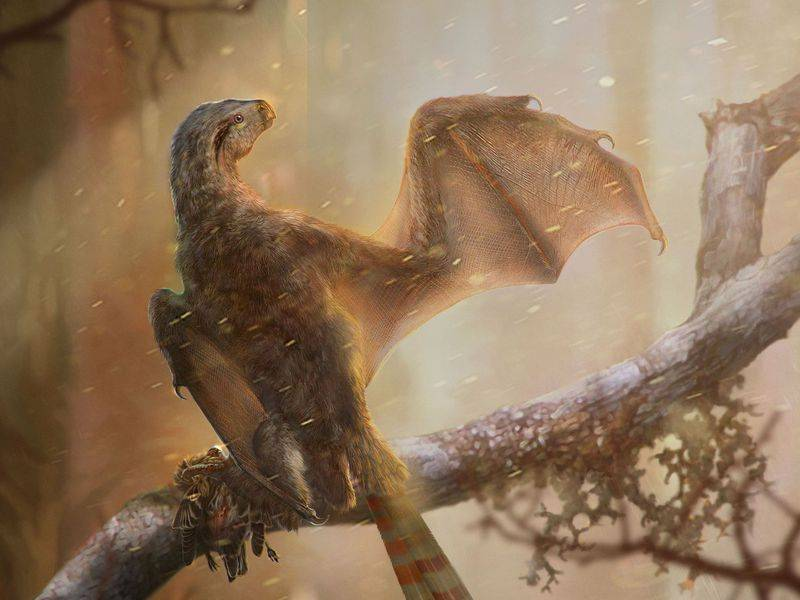Científicos descubren una increíble nueva especie alada de dinosaurio que revela enigmas sobre cómo empezaron a volar