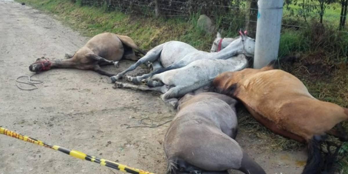 Encuentran cinco caballos muertos y amarrados junto a un poste luego de una cabalgata
