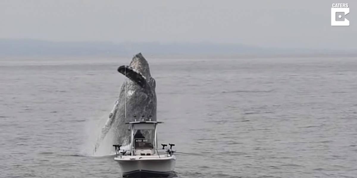 Pegos de surpresa! Aparição de baleia gigante assusta pescadores na Califórnia