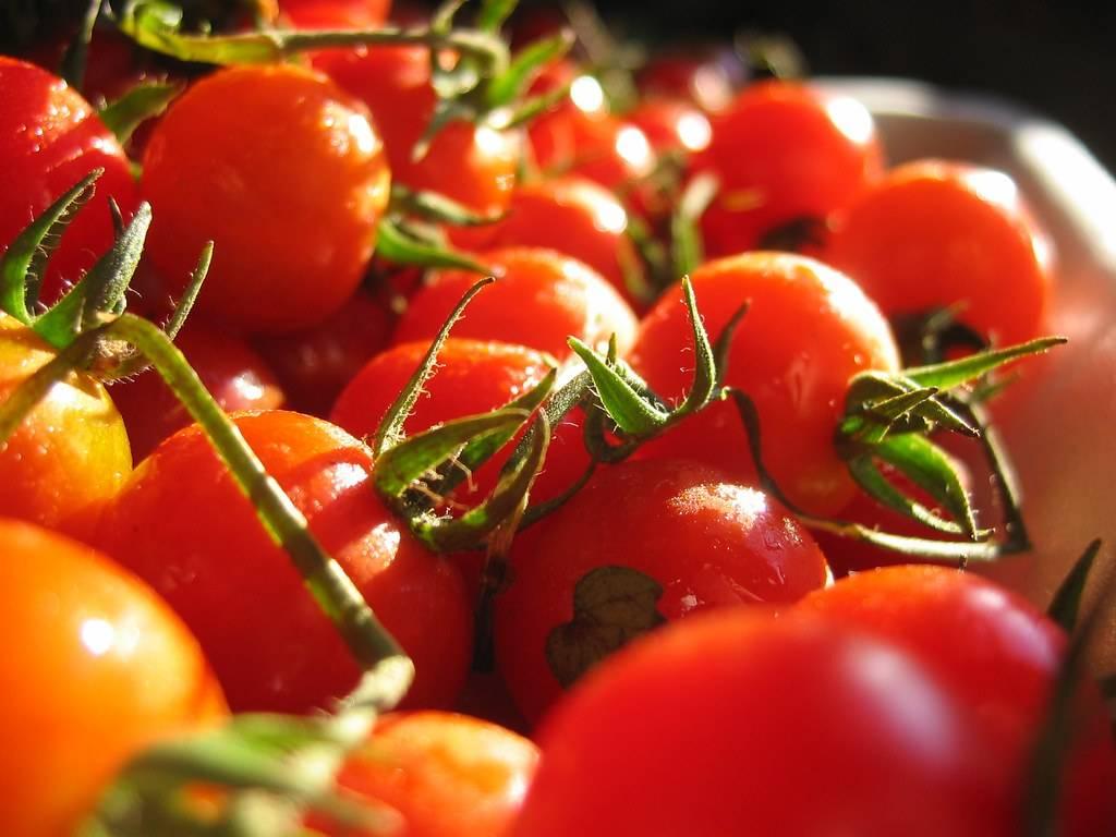 Estudio revela porqué los tomates que solemos comprar tienen tan poco sabor