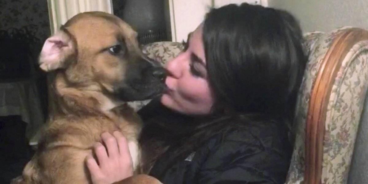 ¿Quién se queda con el perro? Pelea de pareja llega a la Suprema Corte