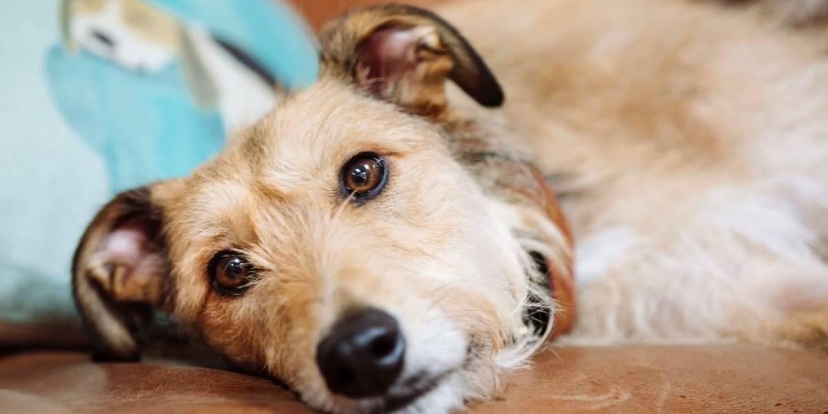 Se descubre una rara enfermedad transmitida de perros a humanos en Estados Unidos