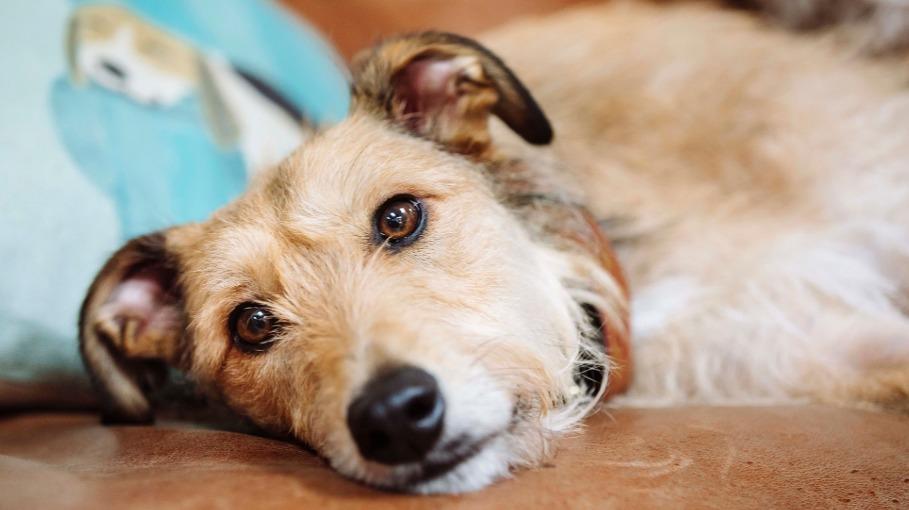 Estudio asegura que los humanos hemos logrado alterar la estructura cerebral de los perros