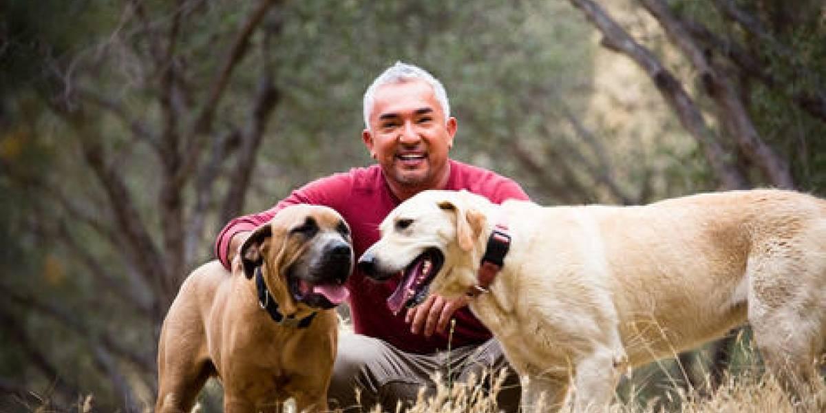 """César Millán: """"El encantador de perros"""" presentará show el 9 de junio"""