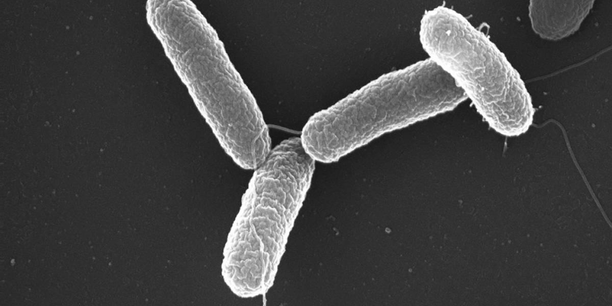Científicos crean técnica la cual logra eliminar las bacterias resistentes a los antibióticos