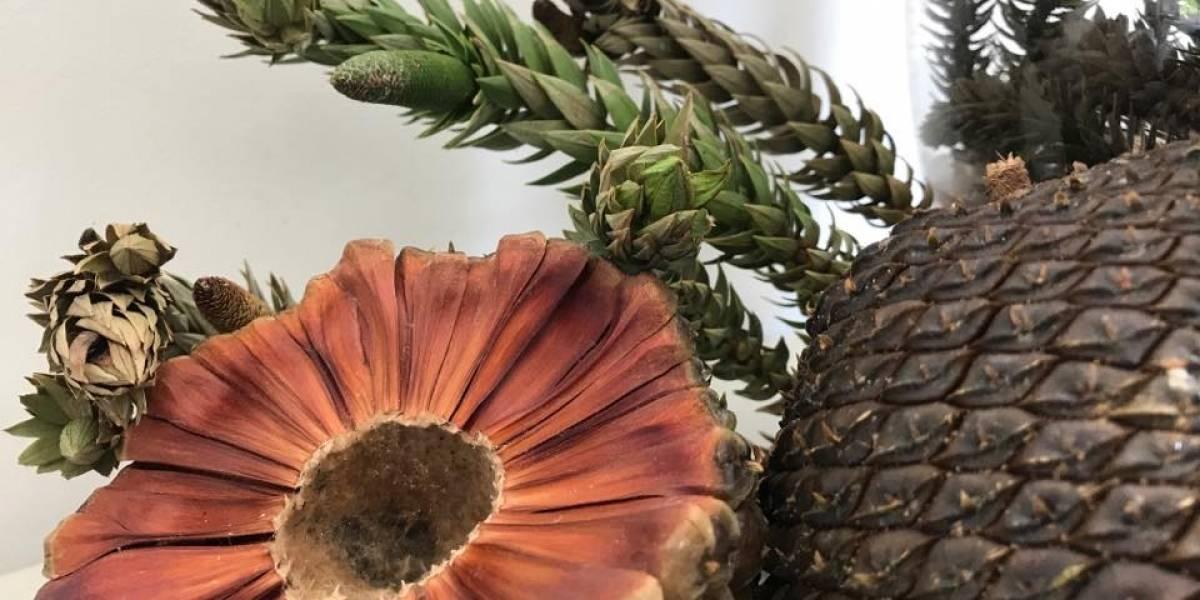Quer fugir da Virada Cultural? Visconde de Mauá recebe concurso gastronômico com grandes chefs