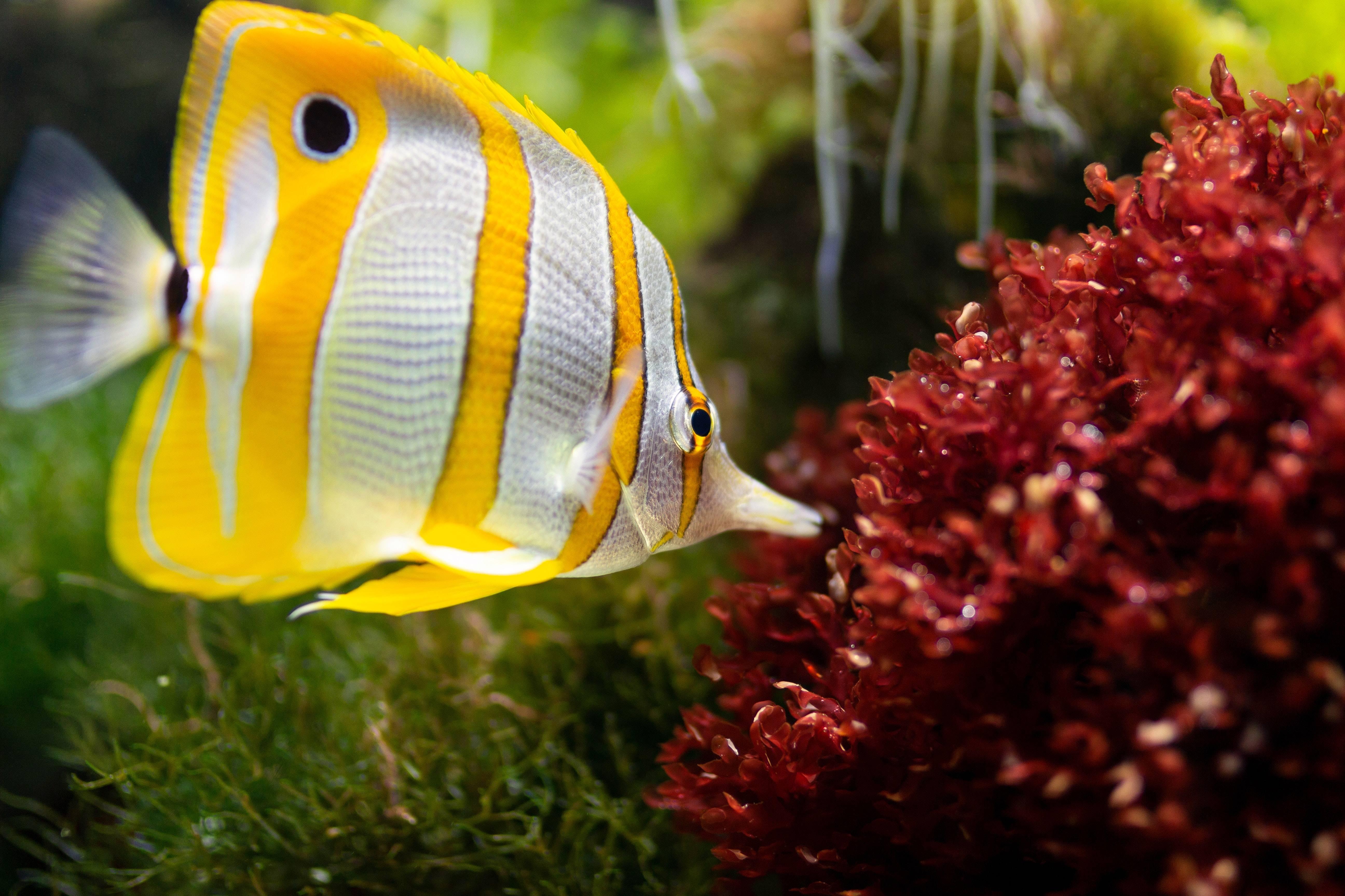 """Especies descubiertas de """"súper coral"""" en Hawaii podrían ser la respuesta para la salvación de los arrecifes del mundo"""