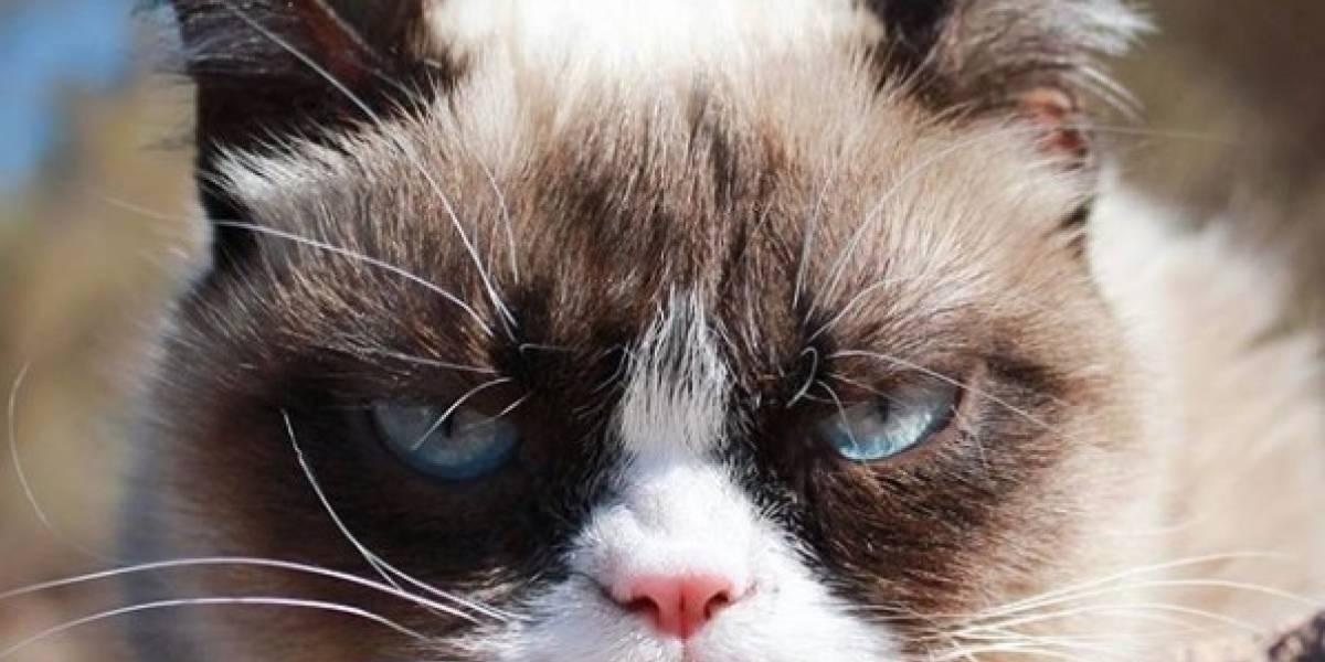 Murió Grumpy Cat, el gato más famoso de Internet