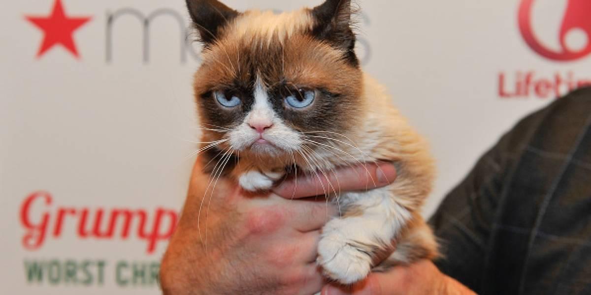 Internet está de luto: Ha muerto Grumpy Cat
