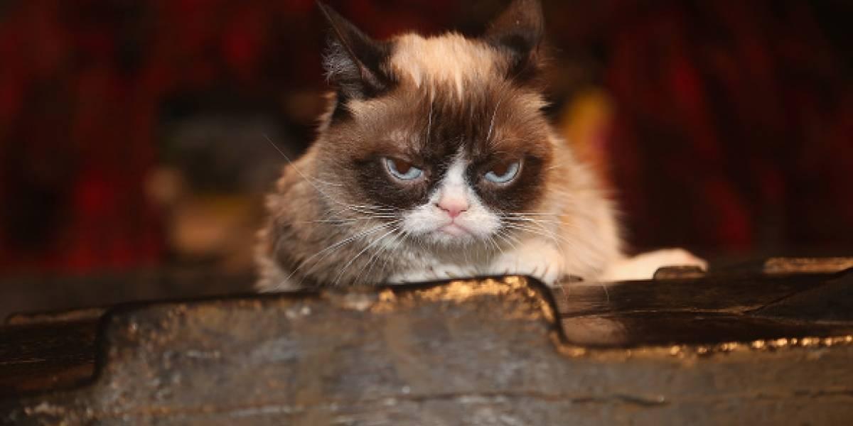 Recordamos los memes que nos dejó Grumpy Cat tras su triste partida