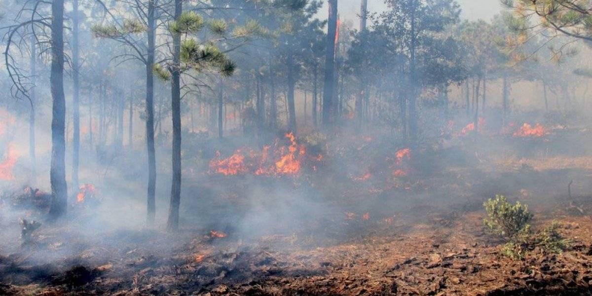 No son atípicos los incendios forestales que afectan al país, afirma académico