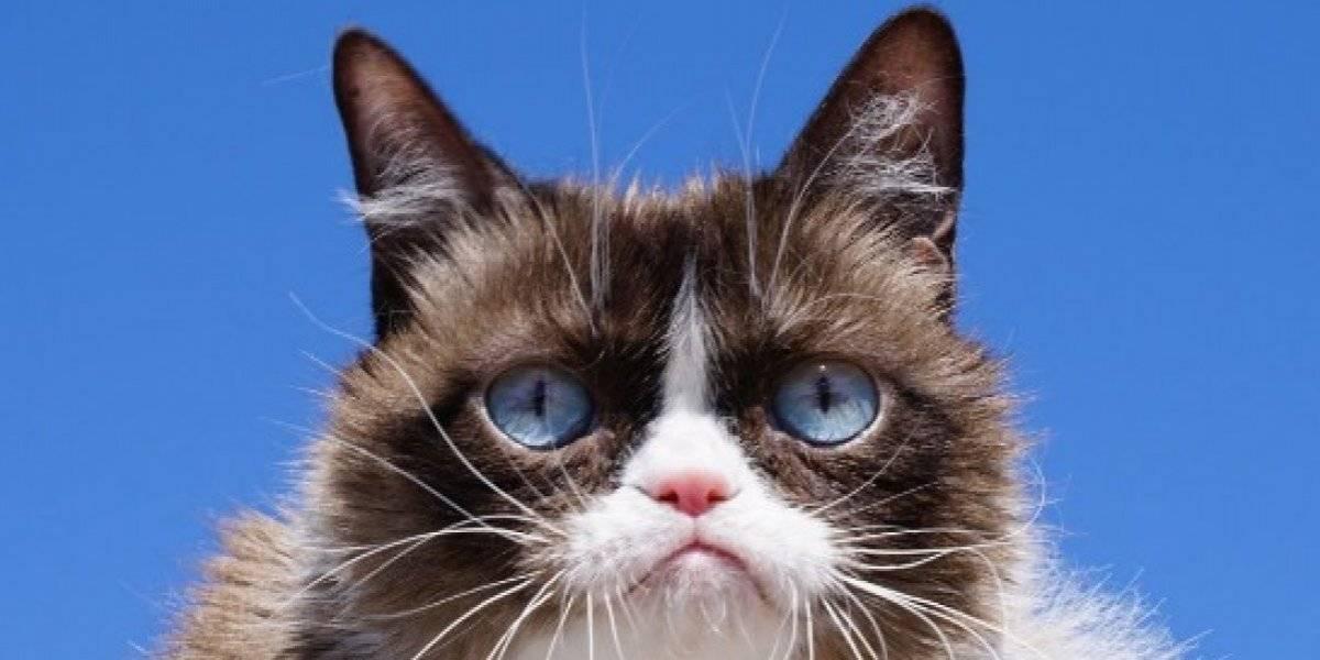 Muere 'Grumpy Cat' a sus siete años