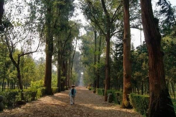 Resultado de imagen para Se suspende donación de árboles en Coyoacán
