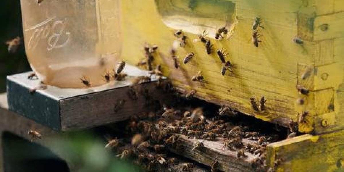 Si queremos salvar a la humanidad, tenemos que comenzar por las abejas