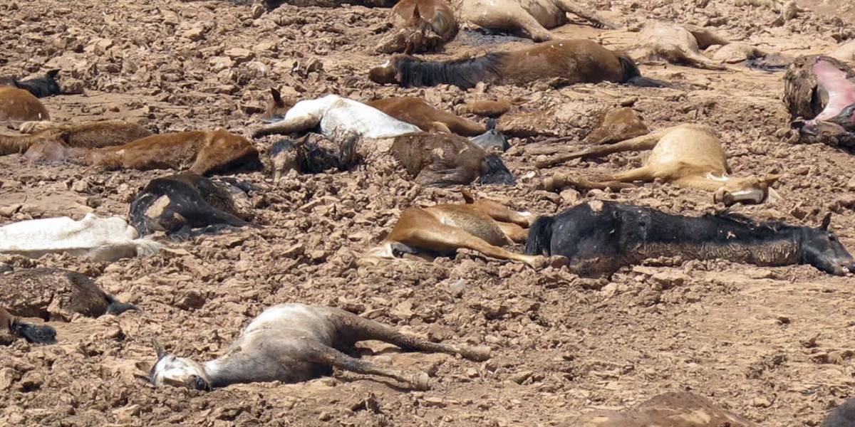 Infografía: La extinción de especies se está acelerando