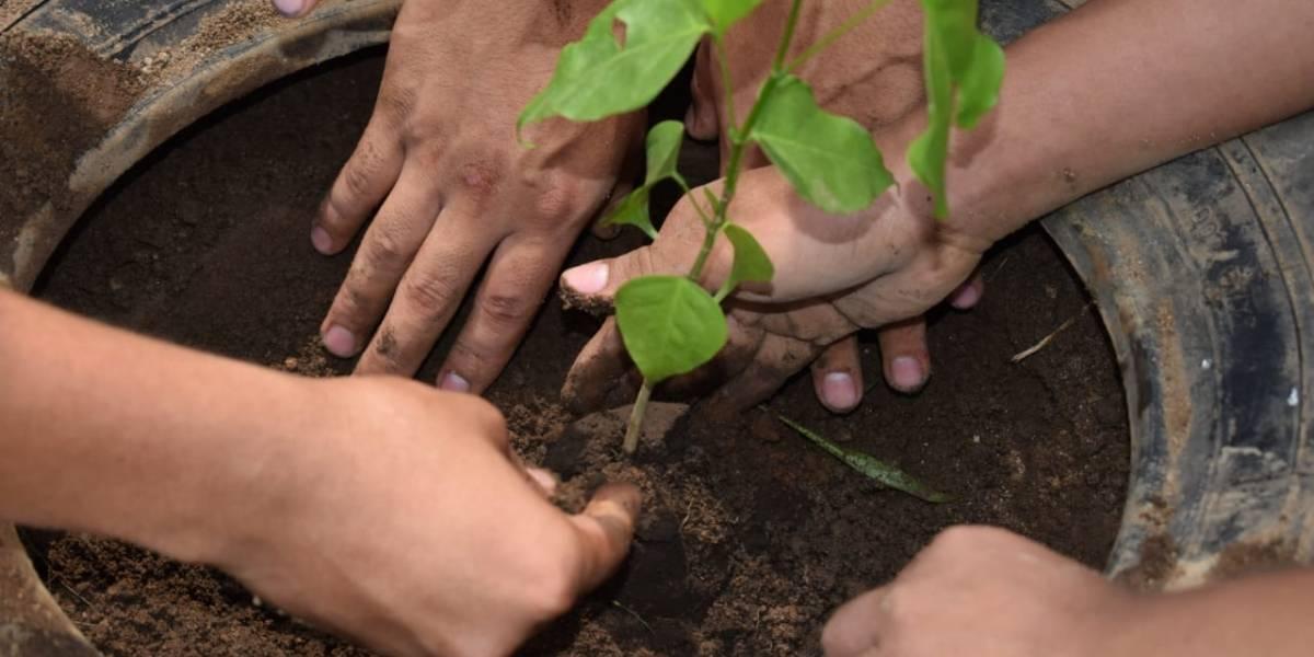 Día del árbol: En varios departamentos buscan frenar el deterioro del ecosistema