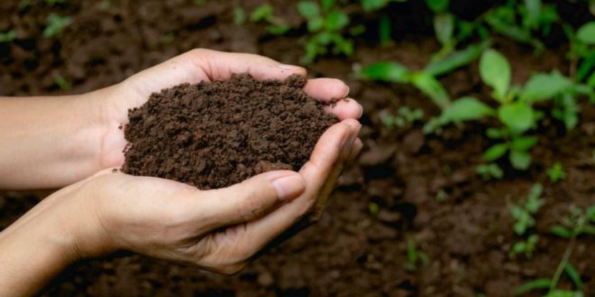 Compost funebre aprobado en Washington: ¿Se puede en Chile?