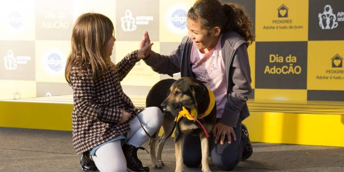 Dia da AdoCÃO: Shopping na Mooca recebe feira de adoção de cães abandonados