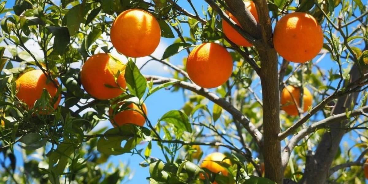 Consumir jugos de fruta natural es tan peligroso para la salud como tomar refresco
