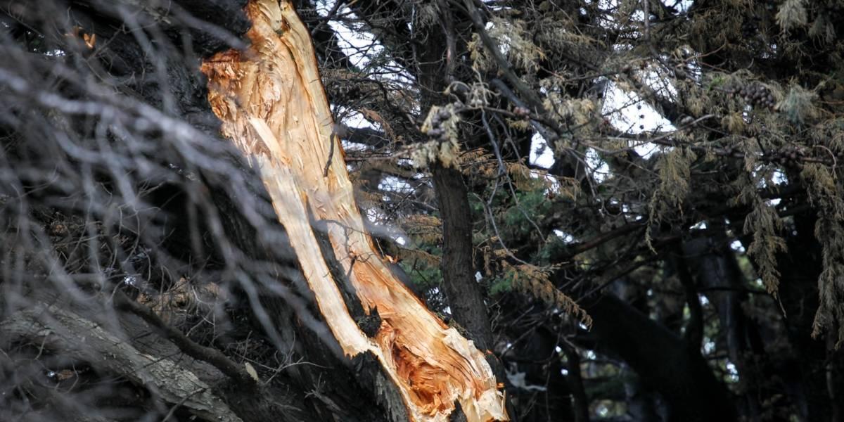 Disfrutaba de un paseo en el parque con su hijo y ahora está en el hospital en condición crítica: le cayó una gigantesca rama en la cabeza