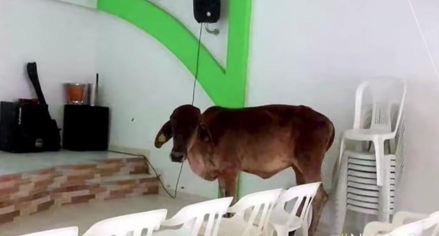 Una vaca cayó del techo de una iglesia mientras feligreses oraban