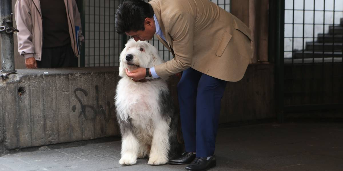Esta es la historia de Zeus, mascota del alcalde Jorge Yunda
