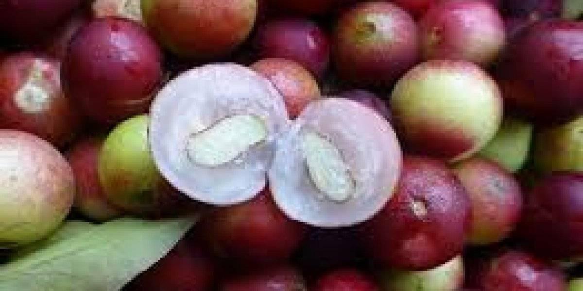 Este fruto da Amazônia tem a maior concentração de vitamina C do mundo