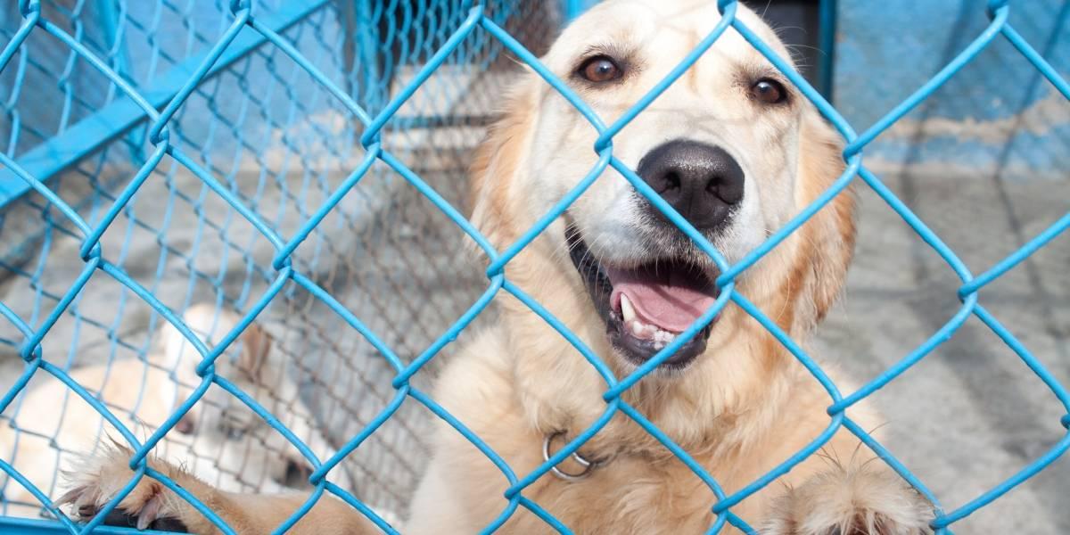 No hay perros peligrosos, sino dueños irresponsables: Agencia de Atención Animal