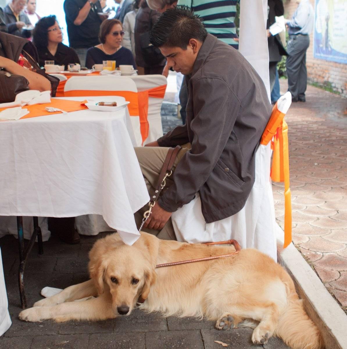 Escuela de perros guía para Ciegos