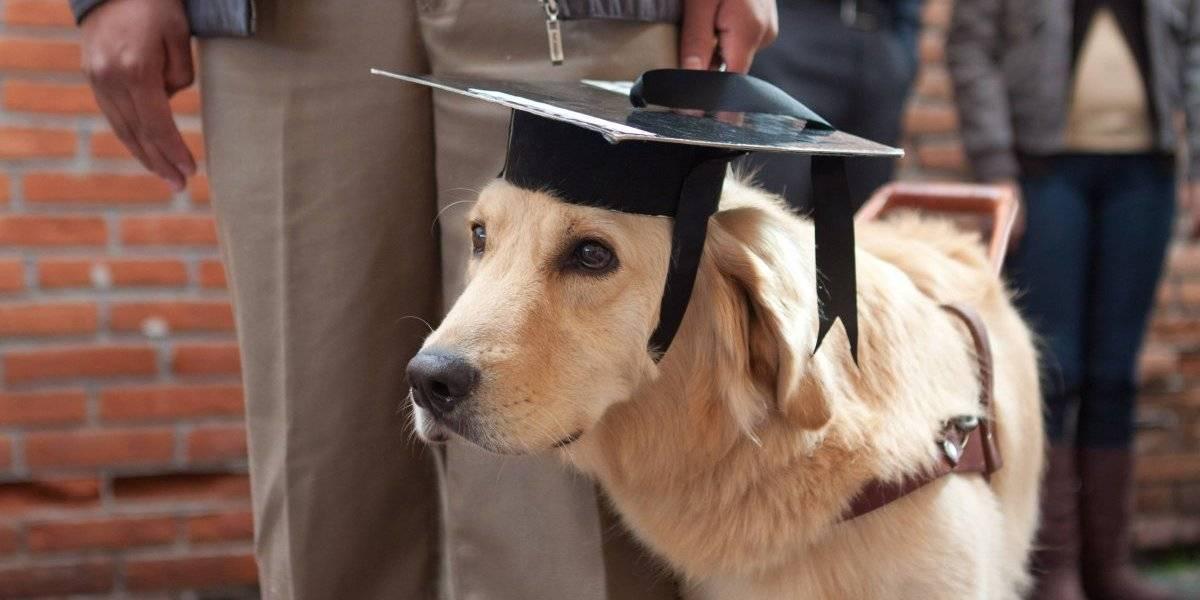Perros guía: la noble labor de ser los ojos de una persona ciega