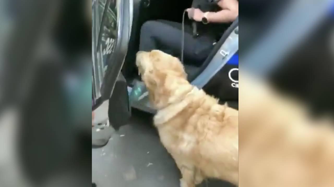 Policías en México detienen a un par de perros por 13 horas