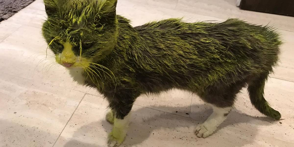 Agonizó durante tres días: gatito fallece tras ser rociado con pintura amarilla por torturador de animales