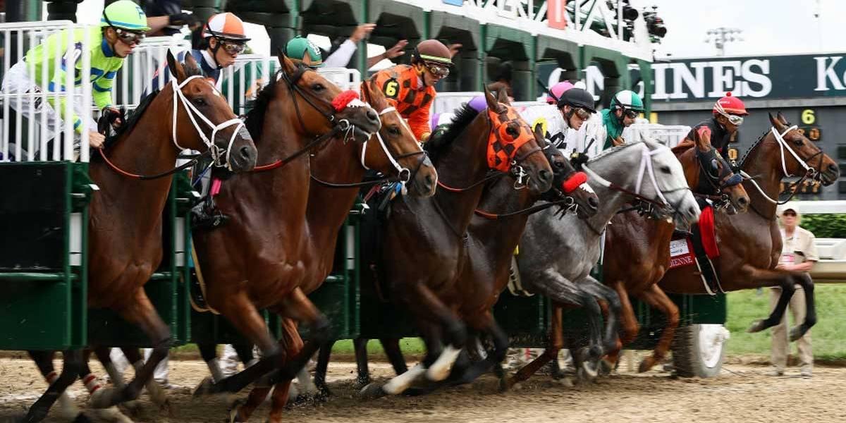 Entidades e governo se juntam para evitar sacrifícios de cavalos em competições